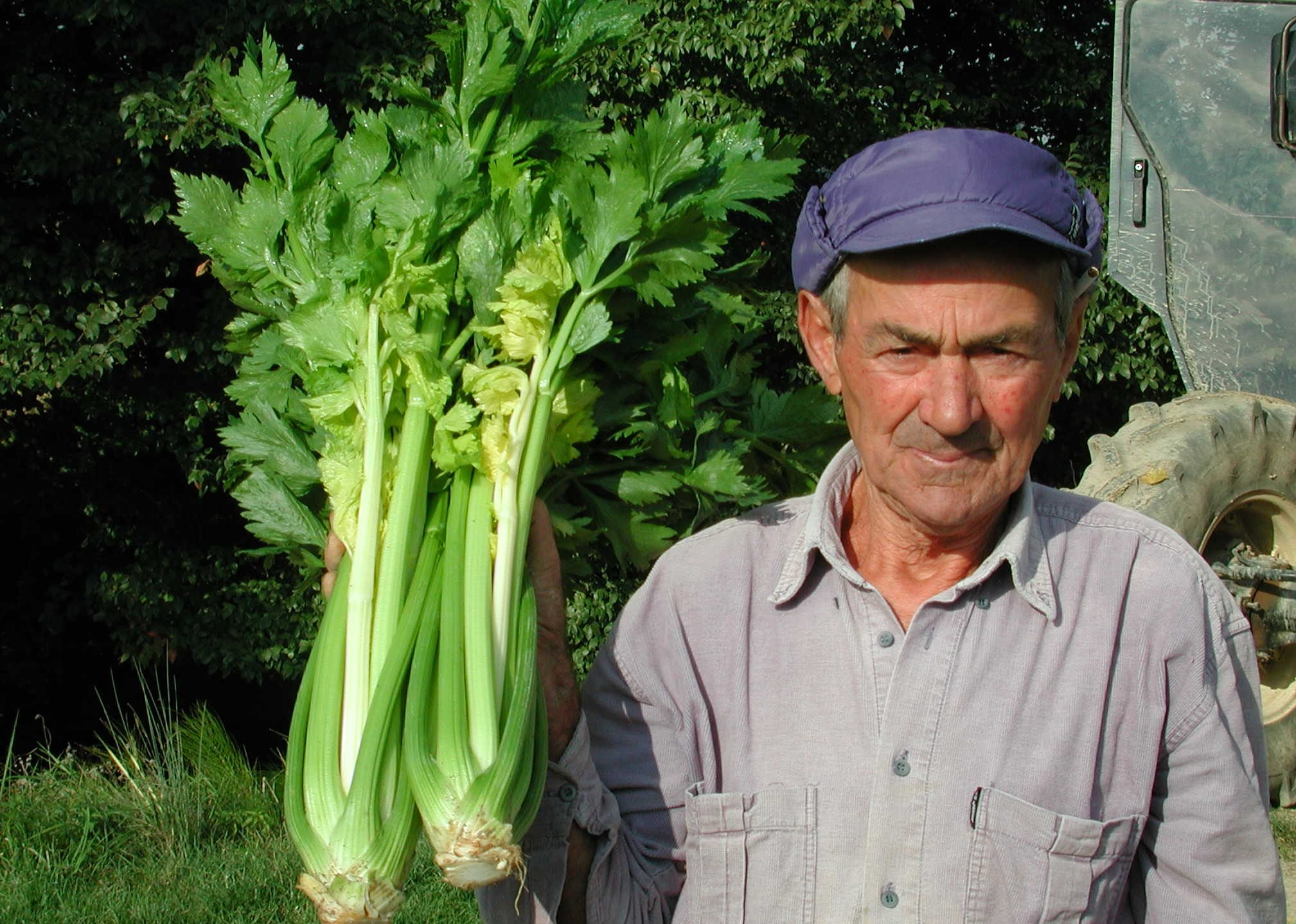 farmer with celery crop