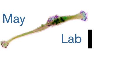 May Lab